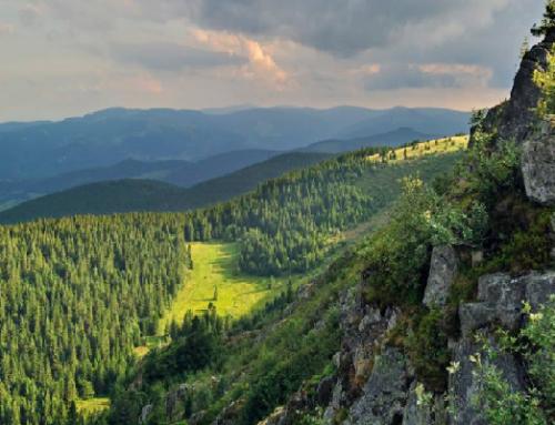 Questionnaire : L'avenir du Massif des Vosges